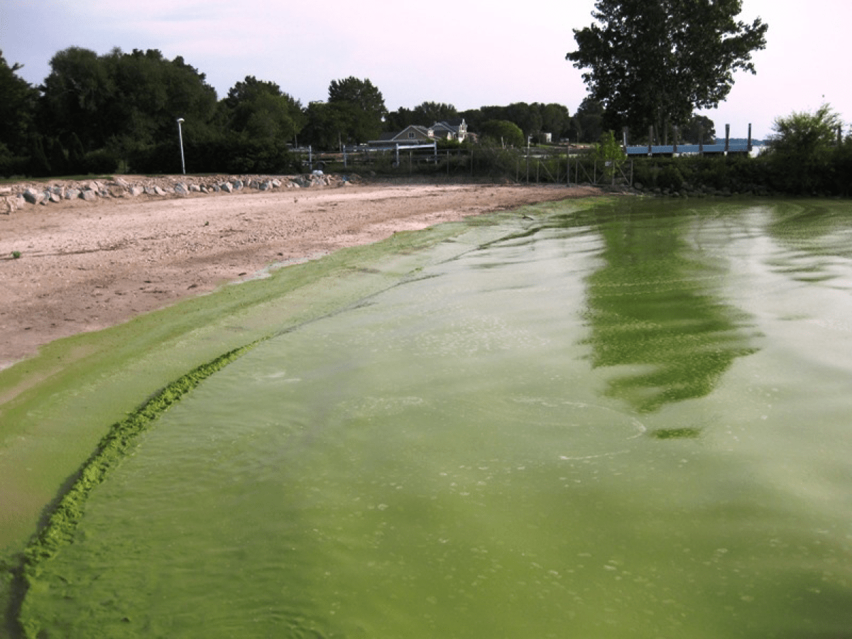 a shoreline of a lake that is completely coated in a bright green algae