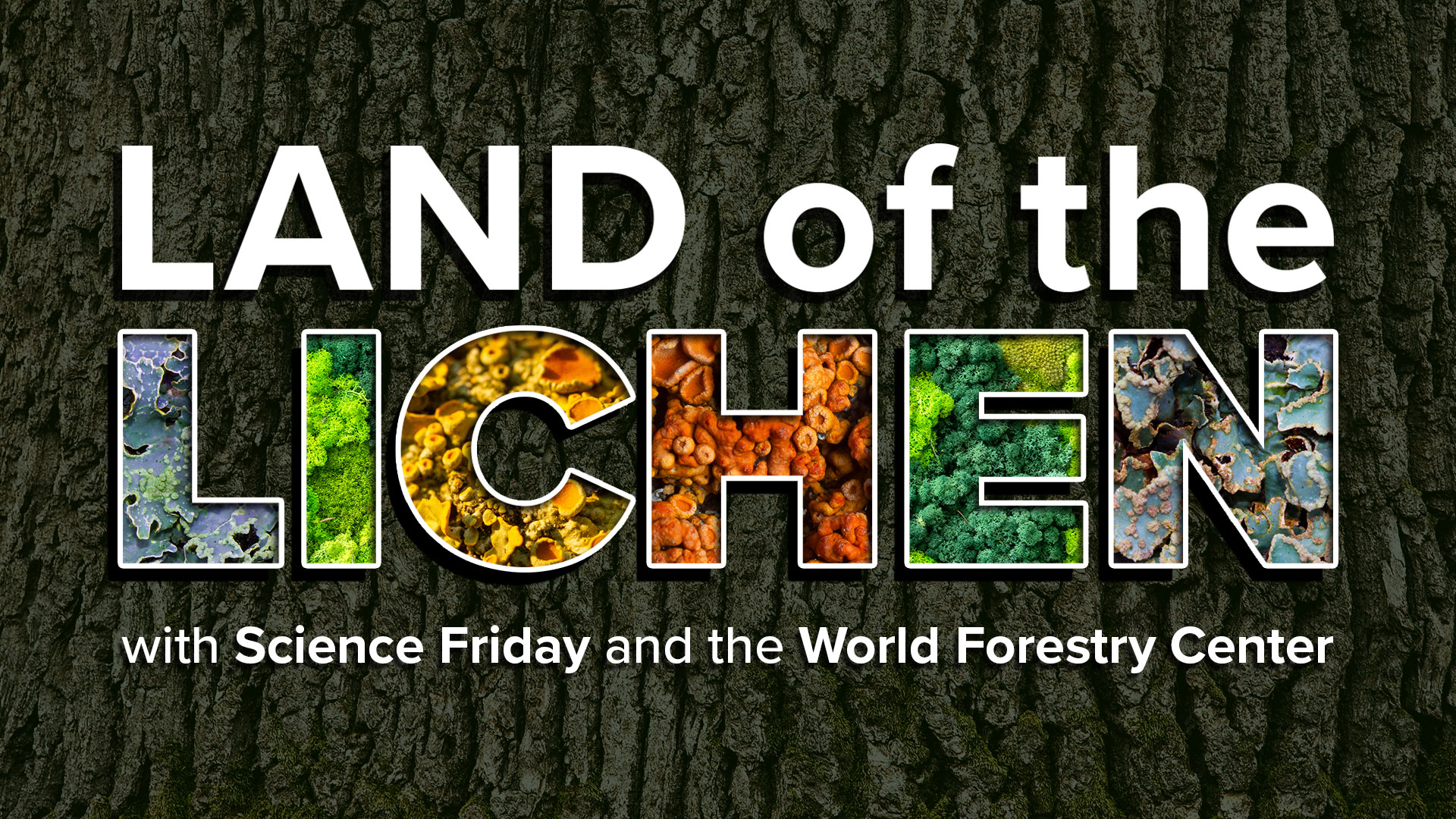 a textured tree bark background with the words 'land of the lichen, with science friday and the world forestry center', with different lichen textures featured inside the word 'lichen'