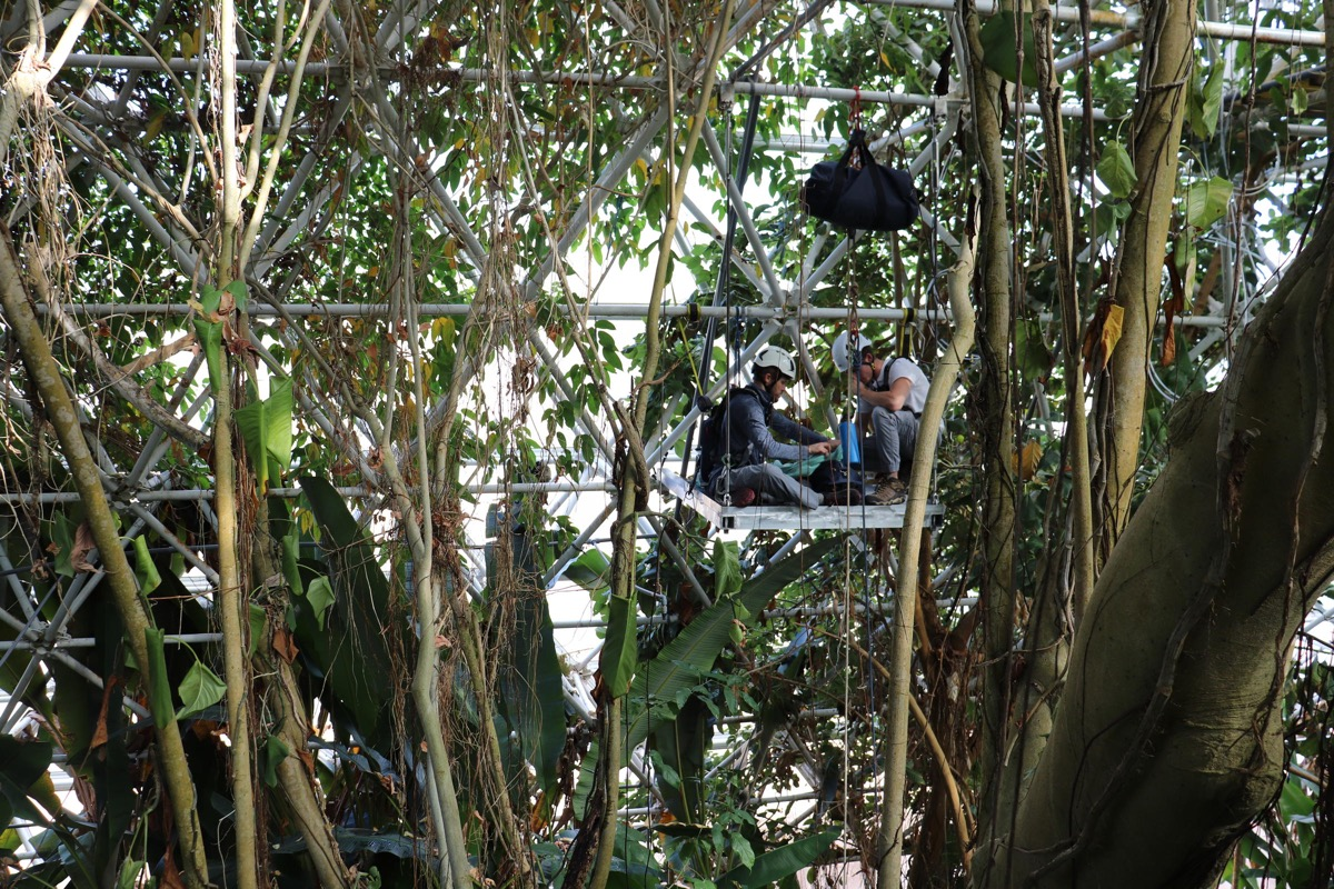 two researchers in helmets sit on a rig to study a lush green canopy