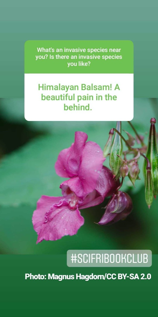 """a screenshot of instagram. in the background is a pictures of a purple flower. text reads """"himalayan balsam! a beautiful pain in the behind."""""""