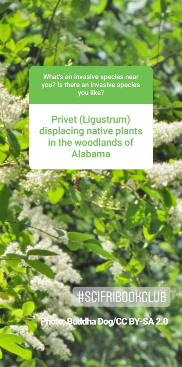 """a screenshot of an instagram story. in the background is a photo of some plants with white puffy bits. the story reads """"privet (ligustrum) displacing native plants in the woodlands of alabama"""""""
