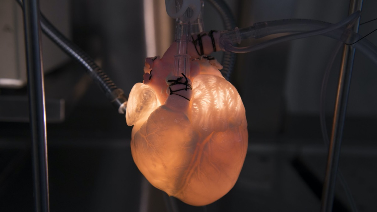a white heart attached to tubing. it glows from a light shining behind it