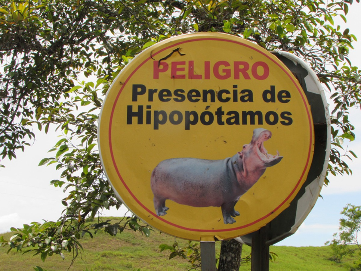 a yellow circular sign of a hippo which reads: peligro presencia de hipopotamos