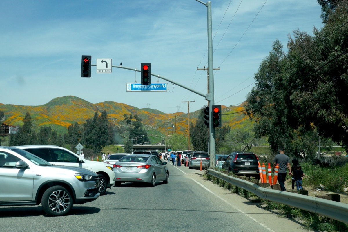 rows of cars are back up at the entry point to the canyon, waiting to see the superbloom