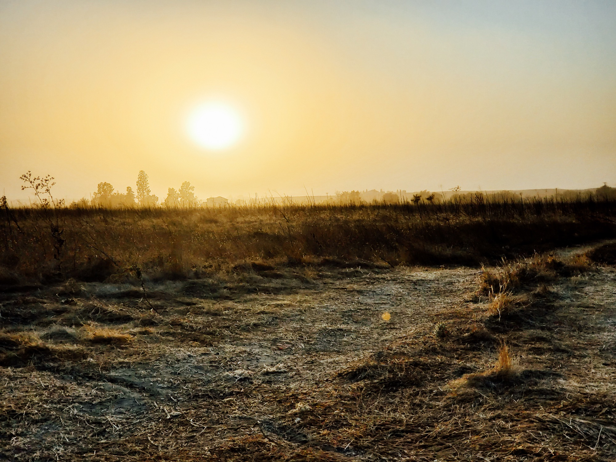 the sun casts an mustard glow over a dusty field. a brown haze hands in the air