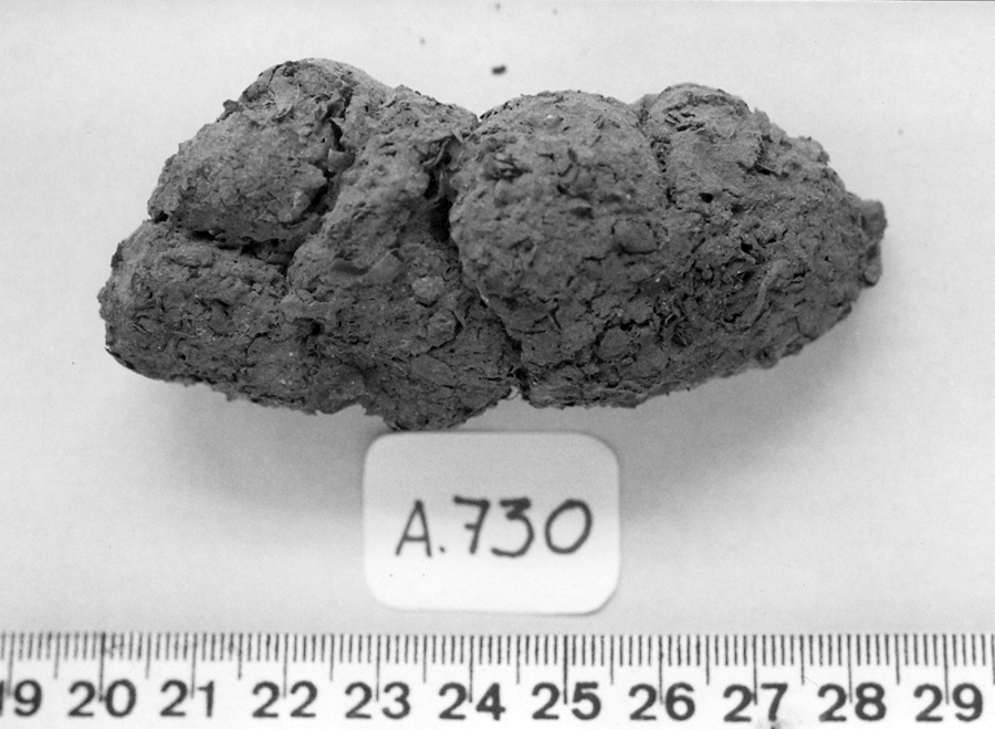 a black and white photo of human poop with ruler underneath it