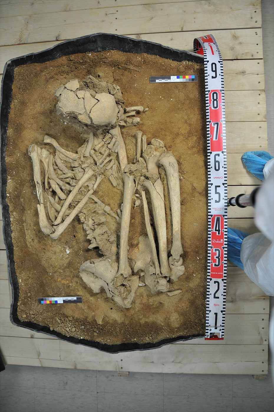 a skeleton curled up in a burial plot with measurement tape beside it
