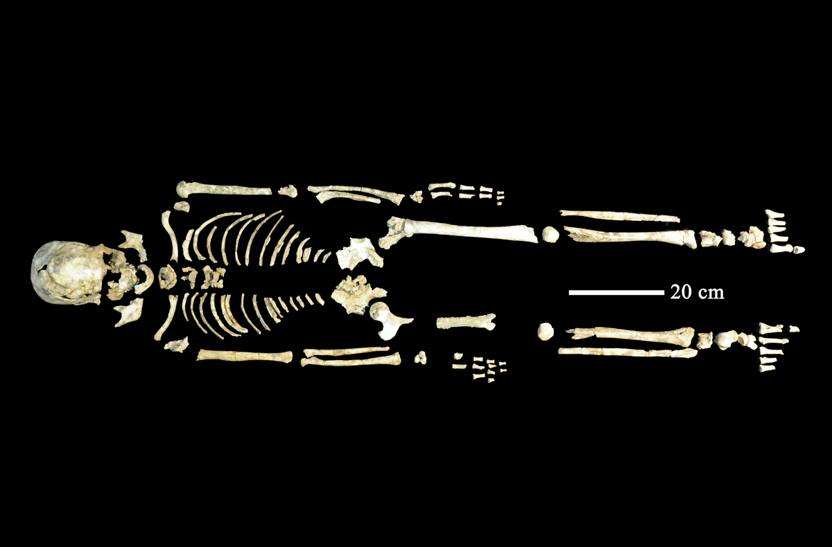 an old human skeleton laid out