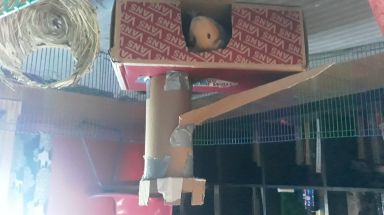 A guinea pig looks out of a castle made of cardboard boxes and cardboard tubes