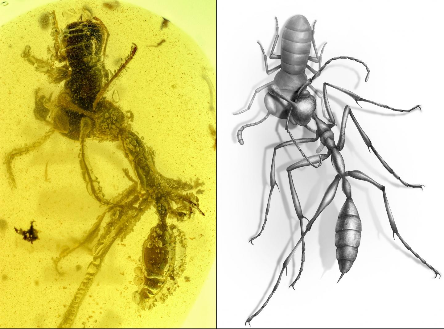 a side by side image. on the left are two insects, an ant and wasp, fossilized in amber. on the right is an illustration of what the ant and wasp could have looked like alive