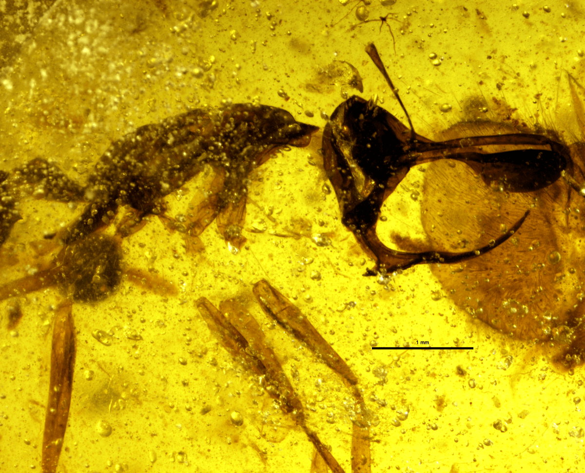 an ant fossilized in amber