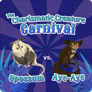 """on a purple striped background reminiscent of a striped circus tent seen from above sit two creatures, opossum and aye-aye, with the title """"the charismatic creature corner"""" above them in whimsical, carnival font"""