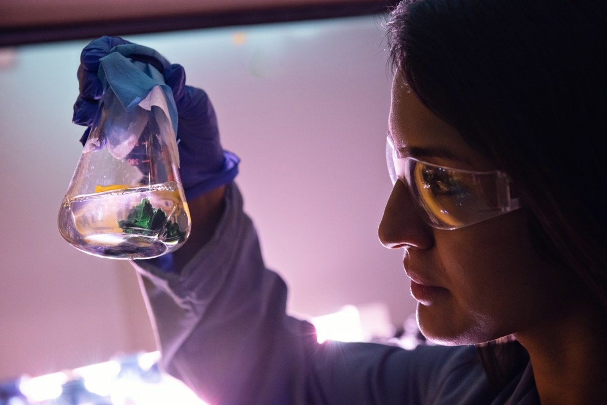 a woman in a lab wearing googles holds up a flask with green growing microbes