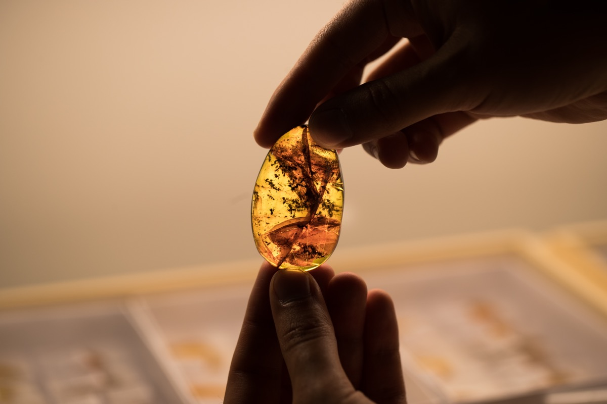 a person holds up a chunk of amber with fossilized ants inside