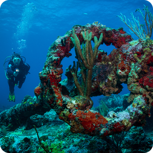 a scuba diver swims toward an underwater anchor from a shipwreck with multicolored coral growth on the anchor