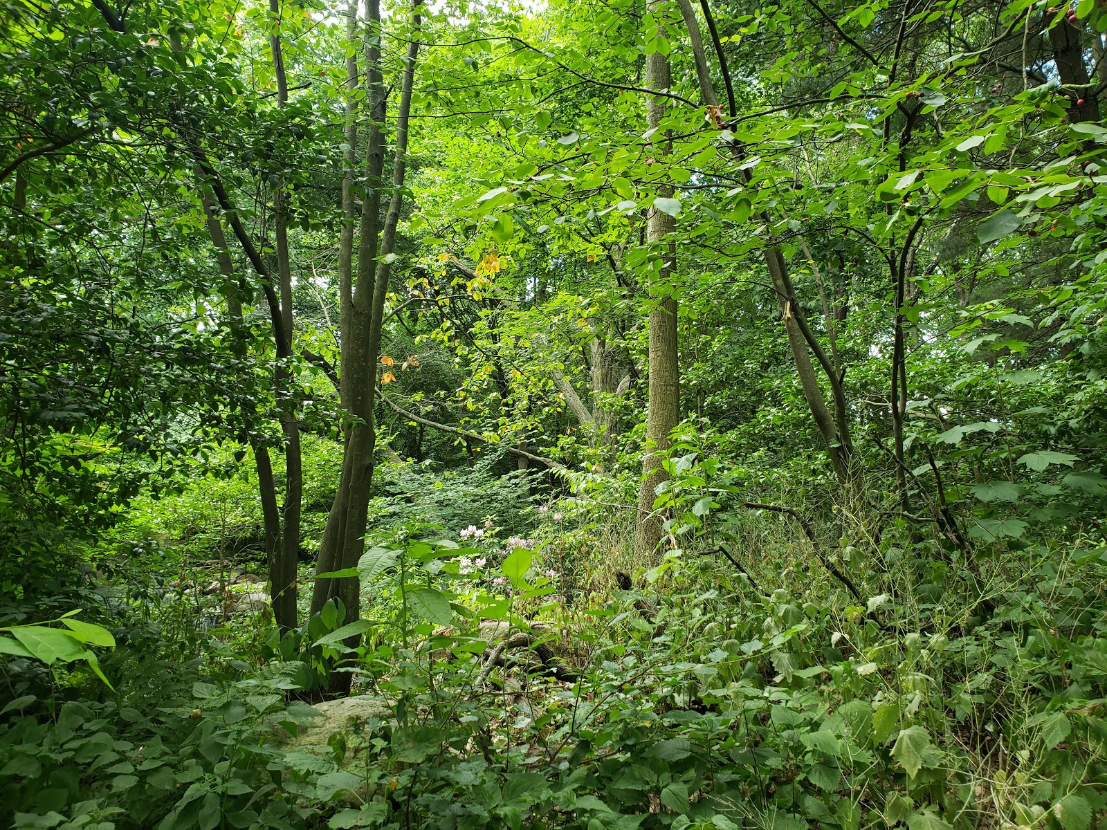 large undergrowth with trees