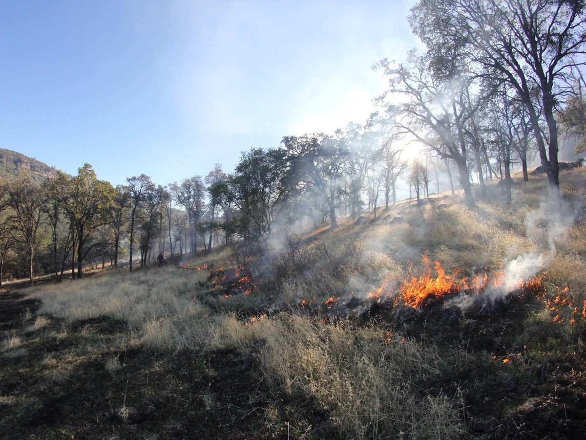 a small area of brush burning