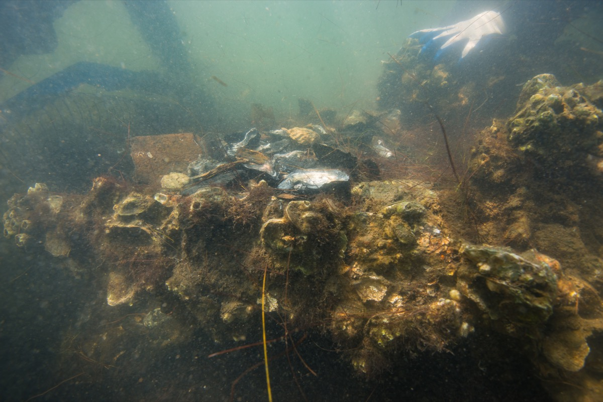 an underwater glimpse and closeup of part of the shipwreck