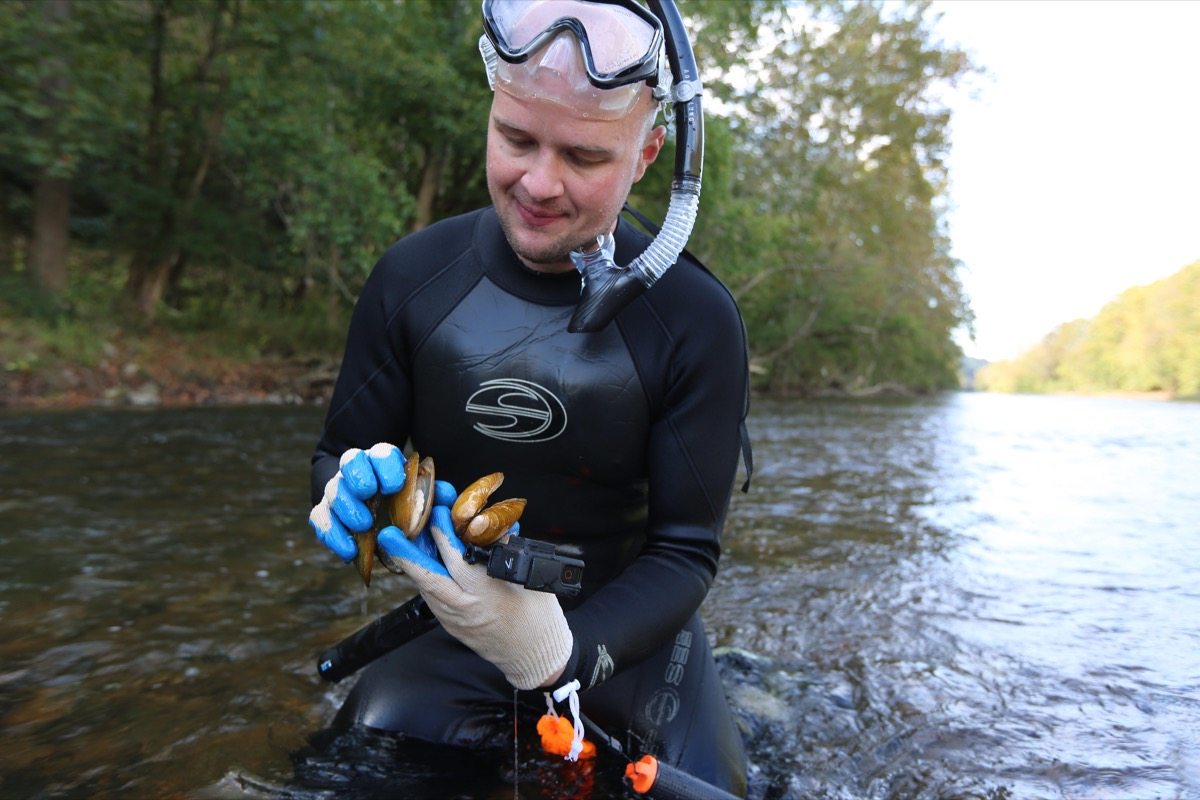 a man in scuba gear in a river holding a pile of mussels