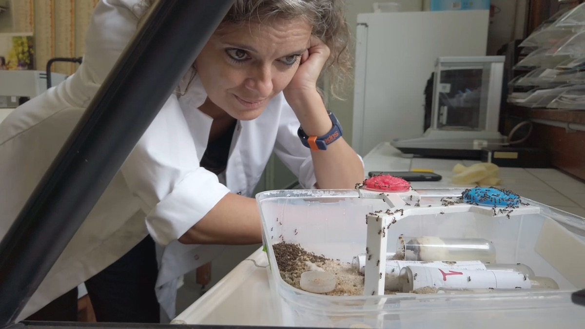a woman scientist in a lab coat leaning over her lab bench and looking over a colony of ants as they move. she looks at them with curiosity and endearment