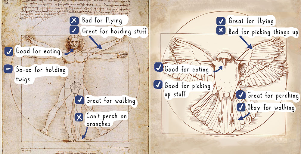 The Vitruvian Man image next to a similarly styled image of a crow. There is