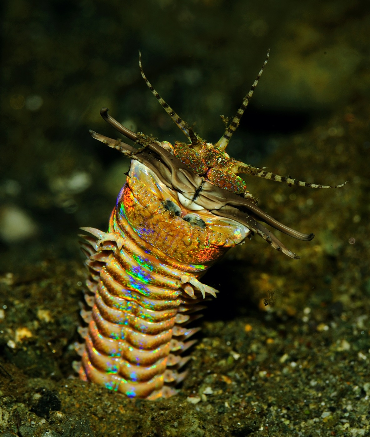 a rainbow colored spindly worm