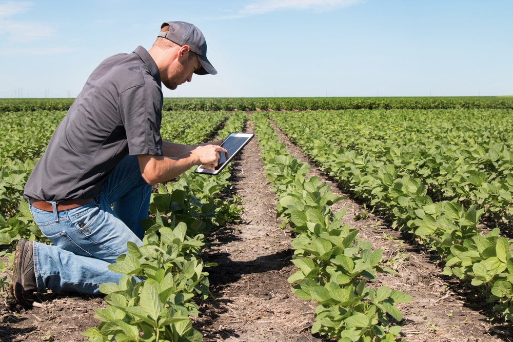 a White man kneeling on the ground on a farm with long rows of cabbages. he's examining a tablet