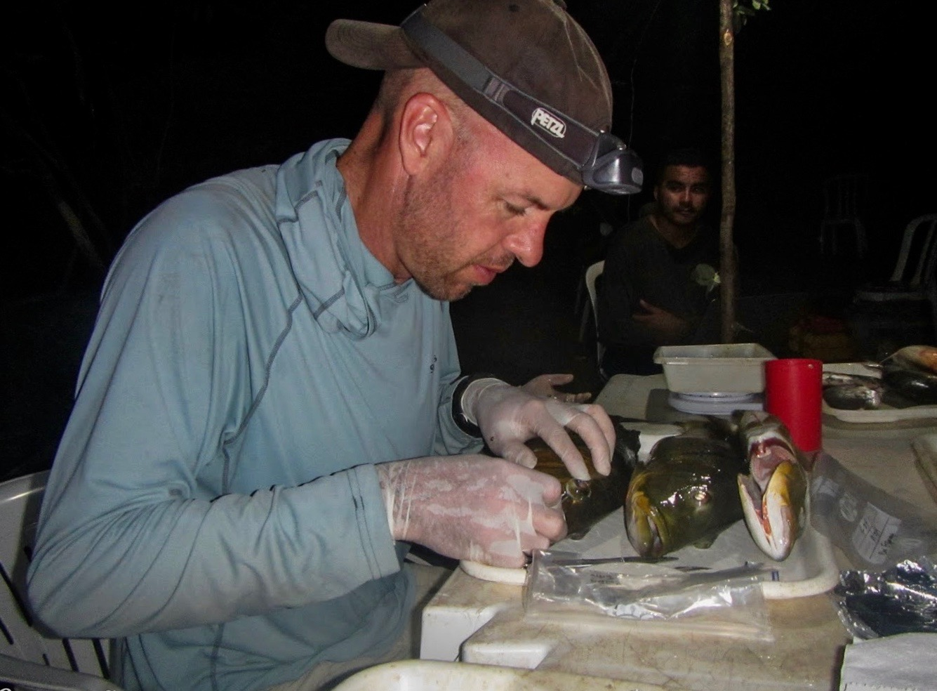 a man in a baseball cap and wearing gloves dissects a fish on a lab bench outdoors