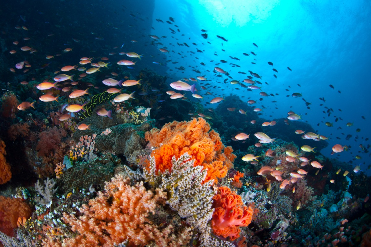 a vibrant colorful coral reef with an assortment of fish swimming around