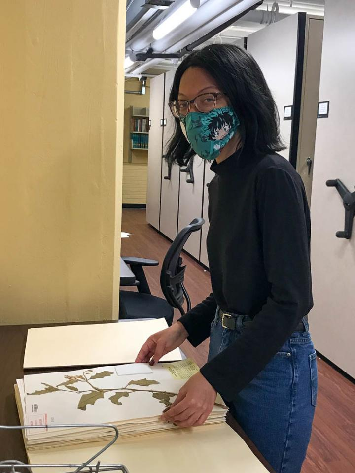 a woman researcher wearing a face mask holds a press of flowering plants in an archive