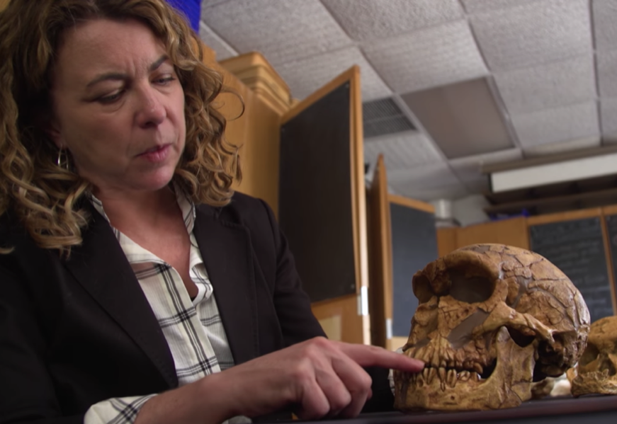 a woman scientist runs her finger over the teeth of a fossilized ancient human skull