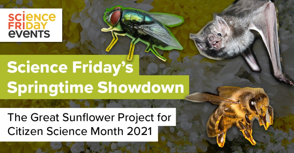 """cut out-style images of a fly, a bat and a pollen-covered bee surround the words """"science friday's springtime showdown, the great sunflower project for citizen science month 2021"""""""