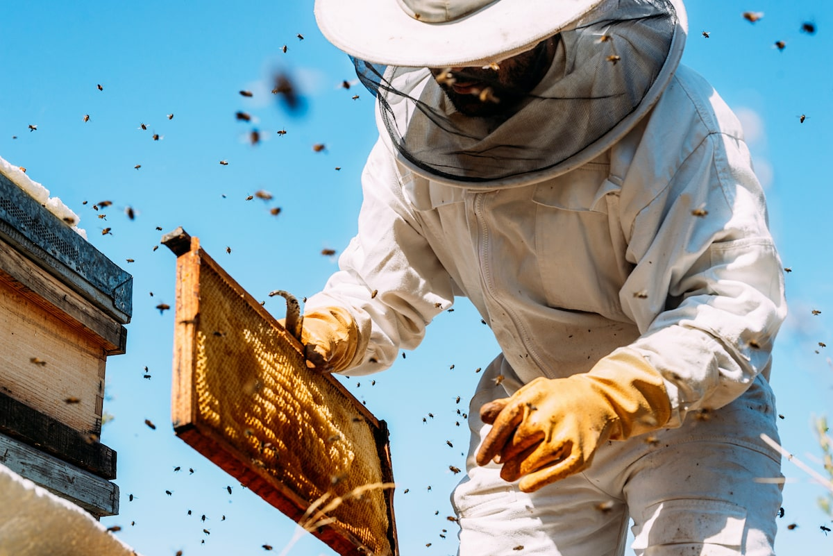 So You Wanna Be A Beekeeper?