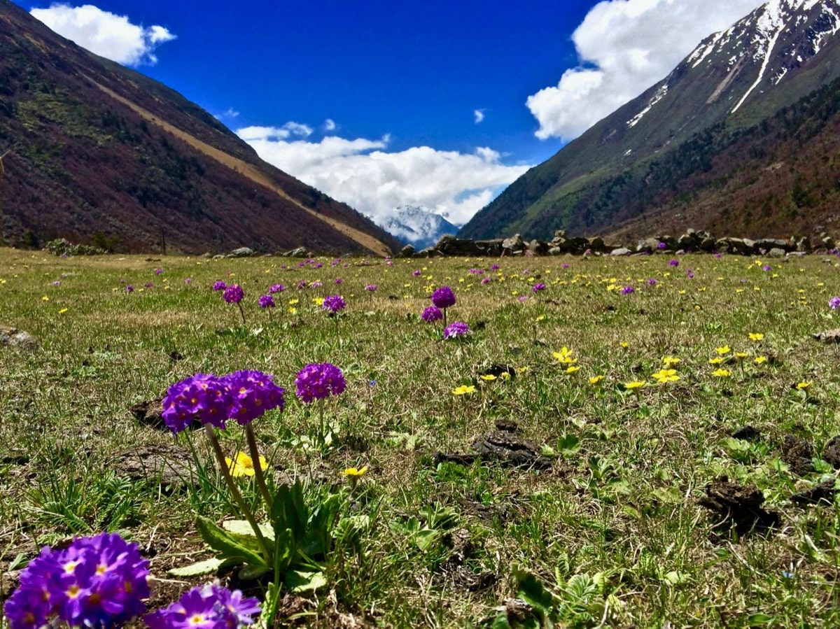 bright and sunny image of a field scattered with purple wildflowers and pollinators hovering nearby, with two mountains and blue skies in the background