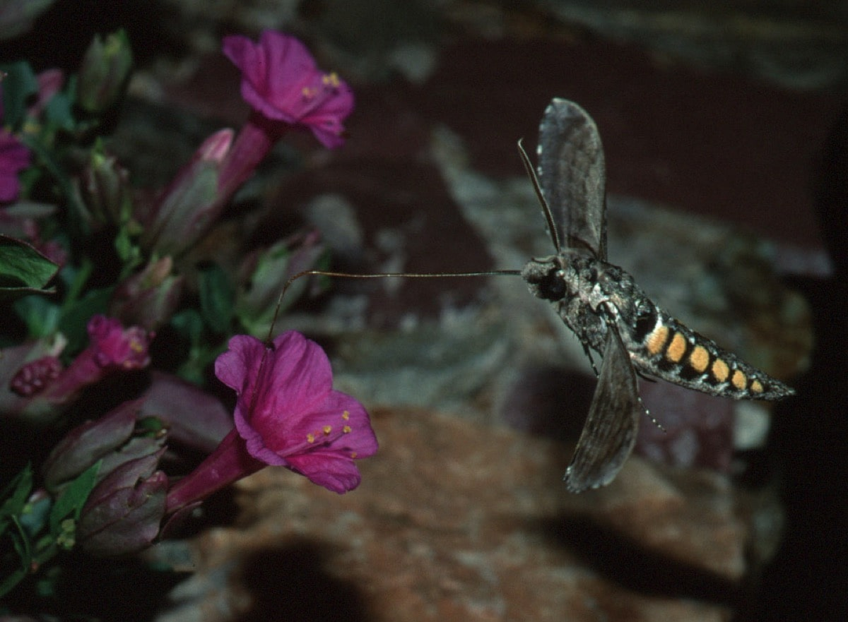 an insect approaches a purple flower for pollinating
