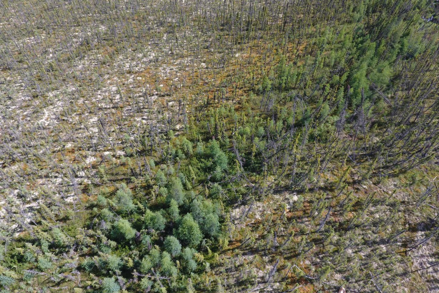 an aerial view of a stretch of woody forest that is thick in the middle but becomes more sparse going outward