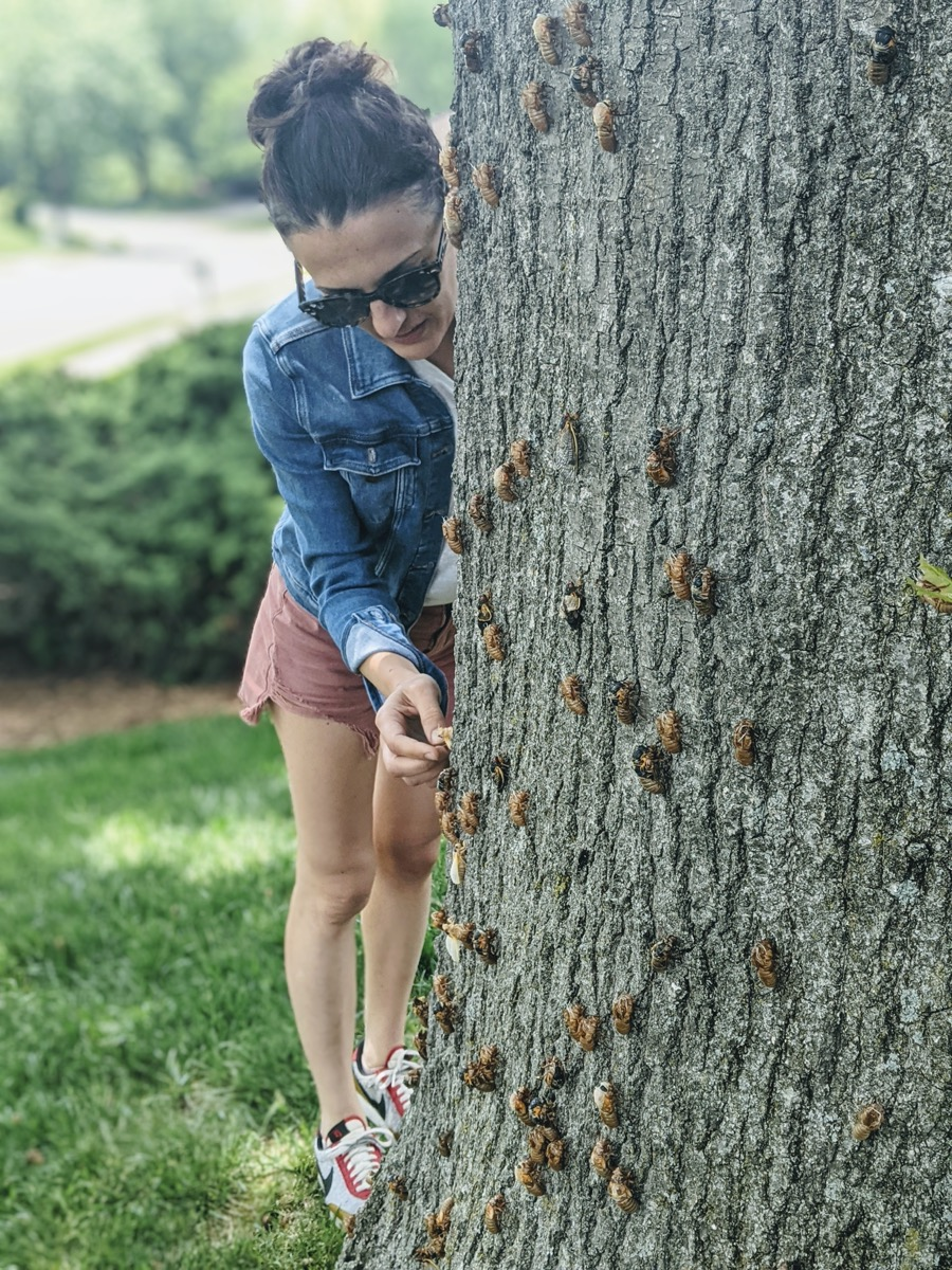 a woman in sunglasses and denim jacket collects cicadas clinging to a tree