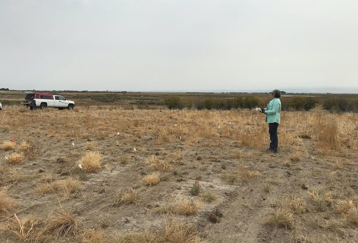 a woman in a light blue coat looks out a dry field with bunch grasses and non-native weeds. she is surveying the area. behind her is a white pick up truck