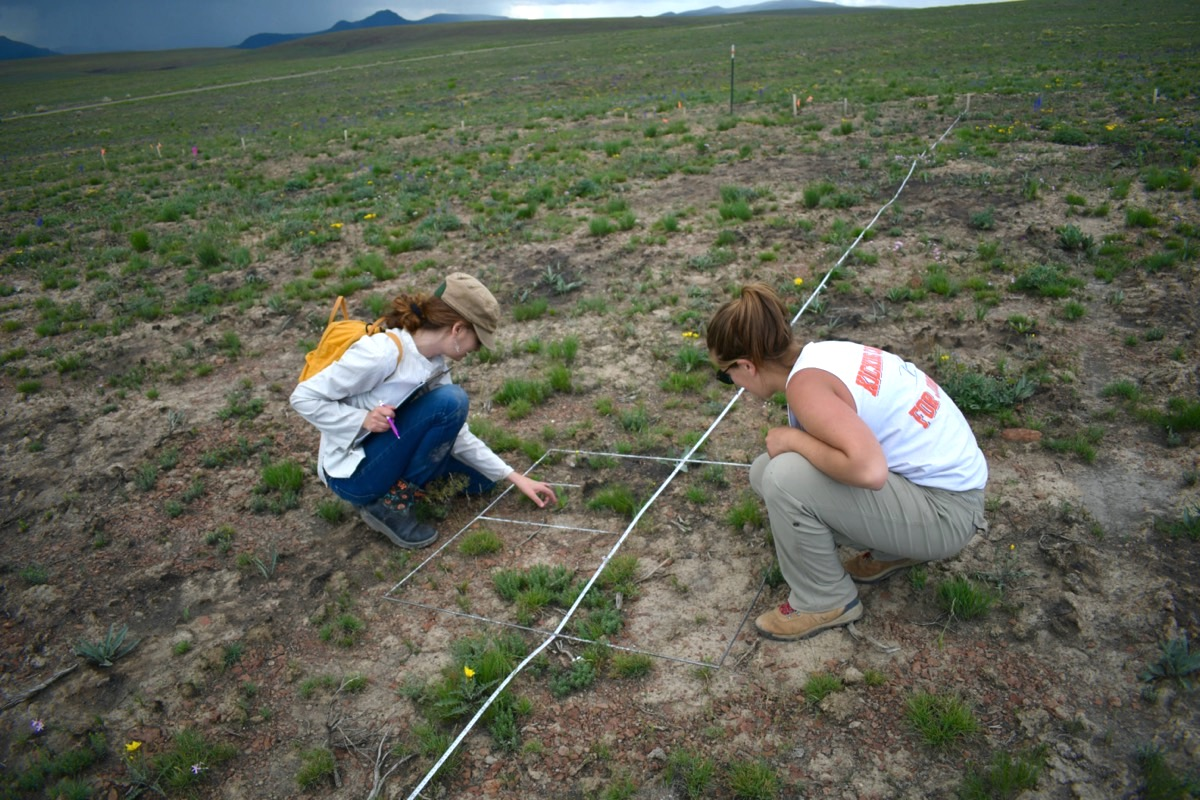 two women kneeling out in a wide open field. they are kneeling on the ground examining small grassy plants in a testing plot