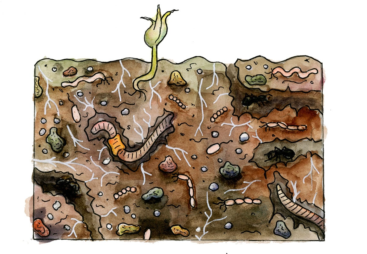 Illustration of a cross section of soil showing plant roots, sediments, rocks, worms, bugs, and bacteria.