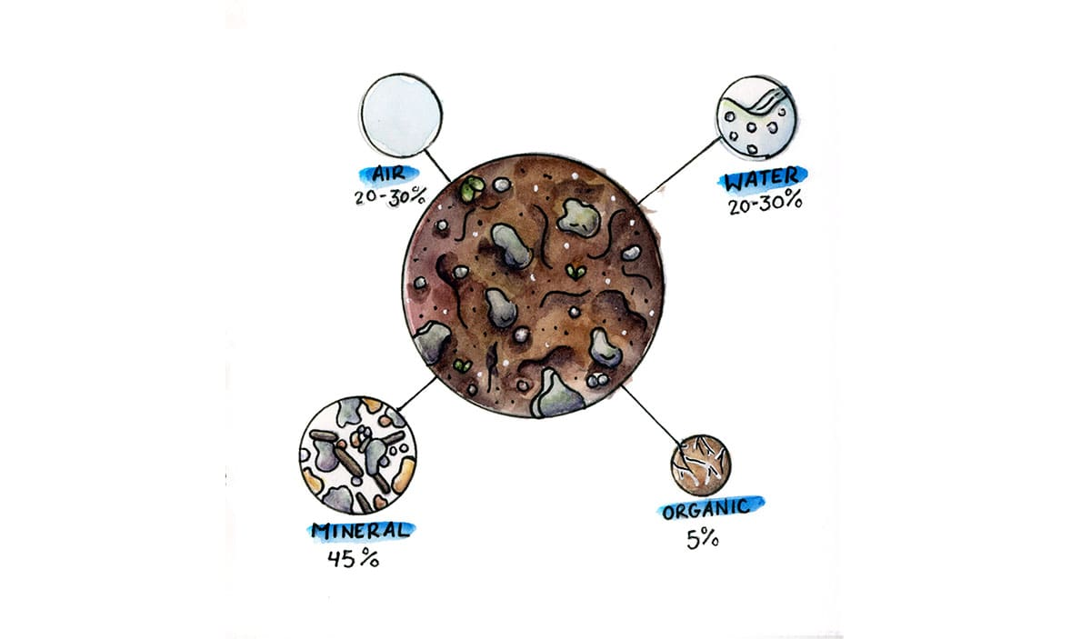 Illustration of soil that breaks down the components: 20-30% air, 20-30% water, 45% mineral, 5% organic matter (all approximate).