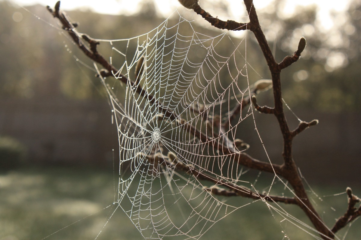 Hanging on the bare branches of the Magnolia tree this spider web glistened in the morning dew