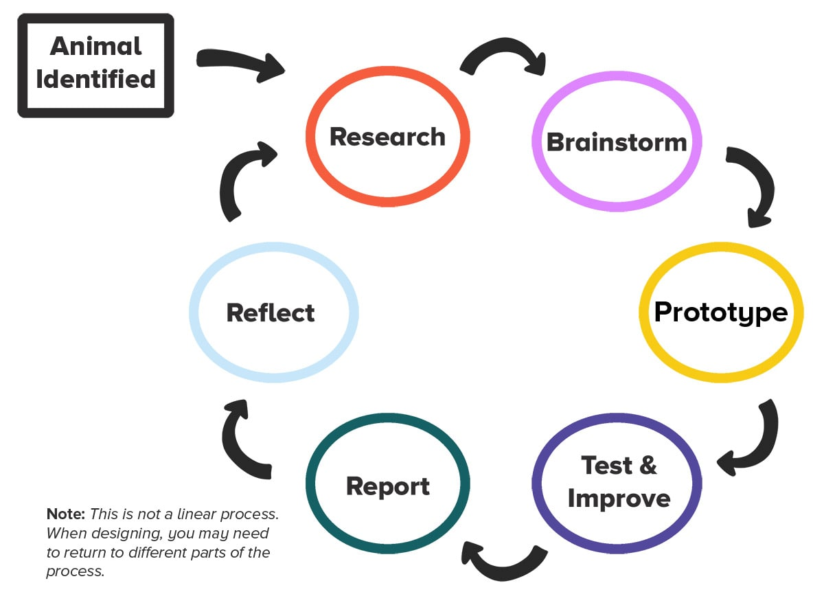 stages of the engineering and design process: research, brainstorm, prototype, test and improve, repeat, reflect