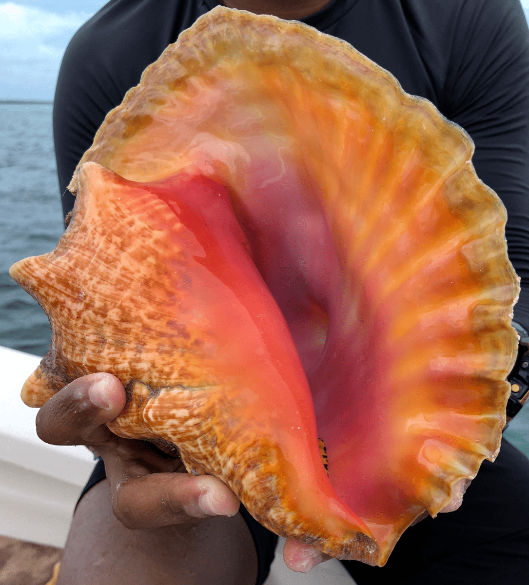 a bright orange and pink sea shell