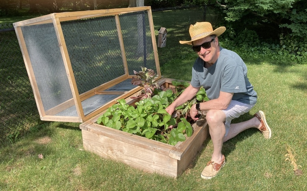 an older man in a straw hat and glasses kneels next to a garden patch secured in a wooden box with a netted covering over it
