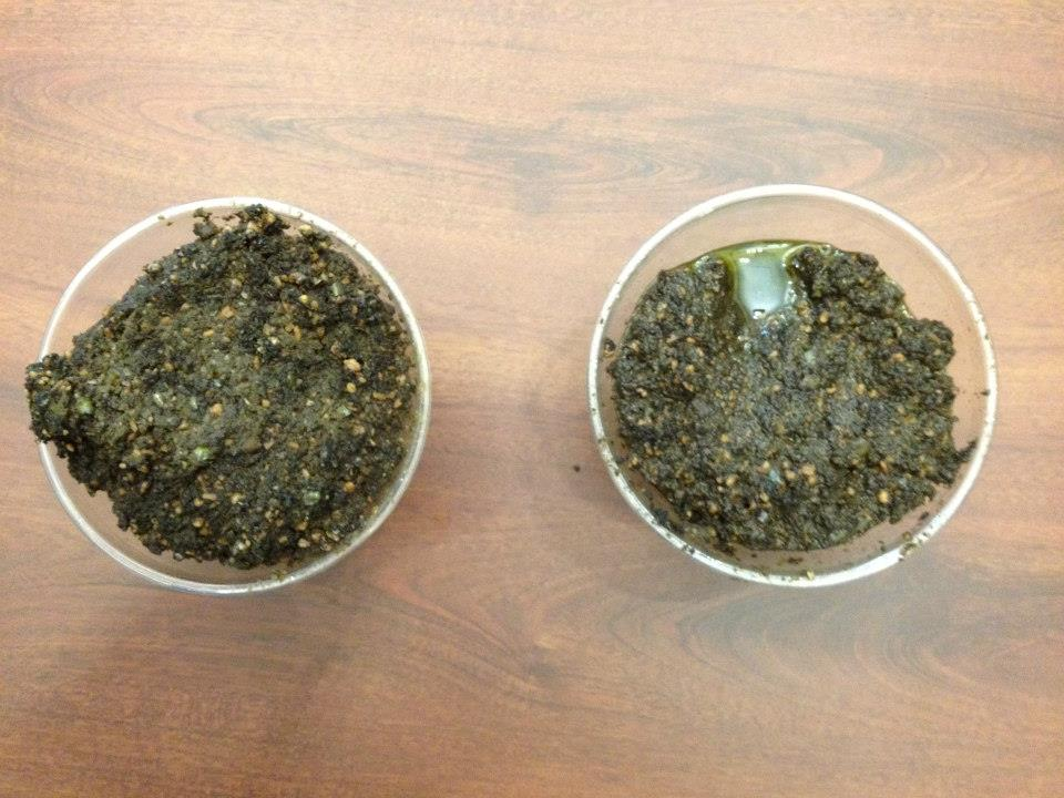 Photo looks down into two beakers with dark brown-green sludge that is chopped up olive pomace, a byproduct of the olive oil making process