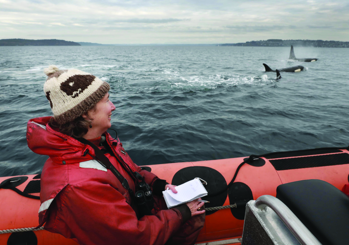 a woman in a beanie and red coat in a boat looks out at orcas swimming in the water