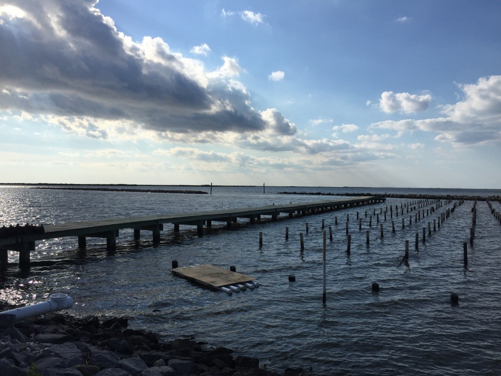 oyster farm and dock going out to shallow ocean inlet