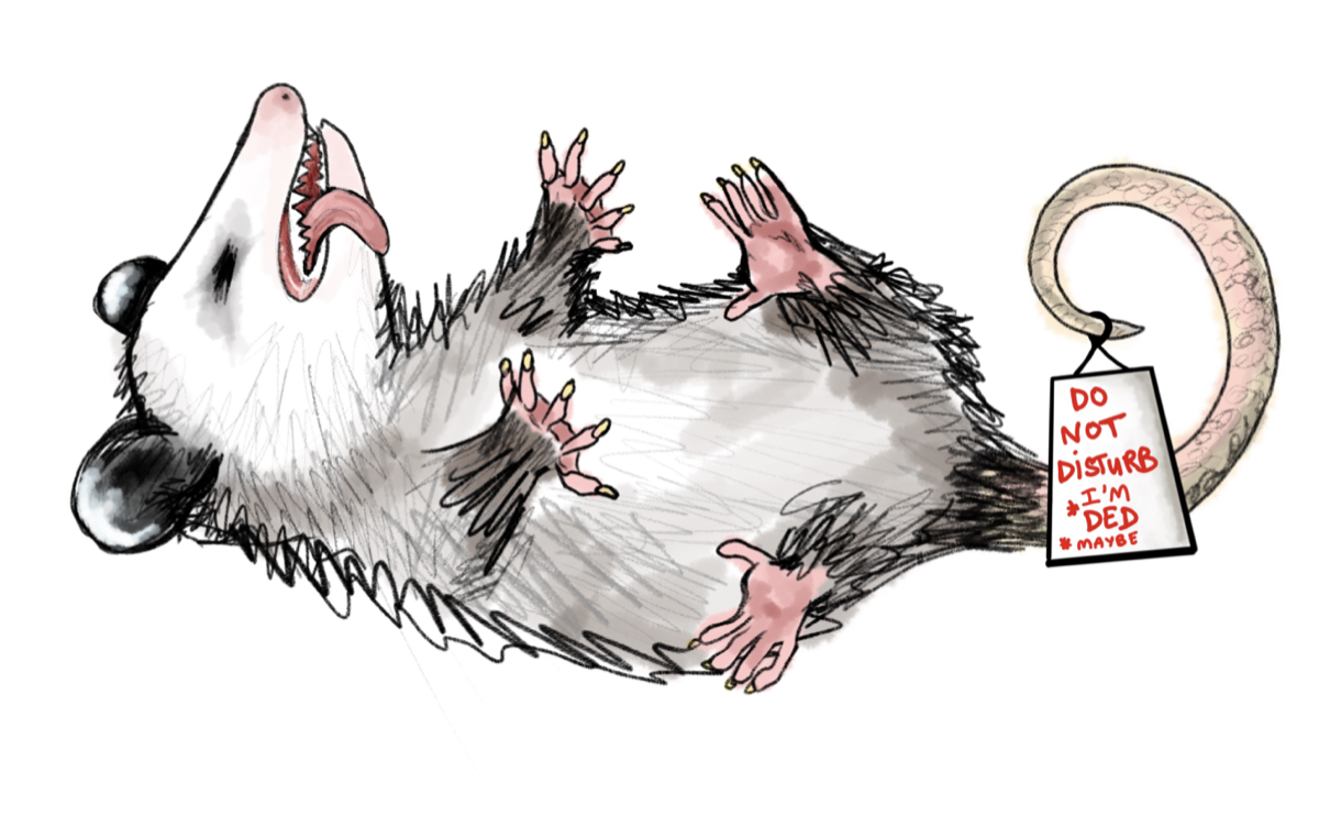 an illustration of an opossum playing dead