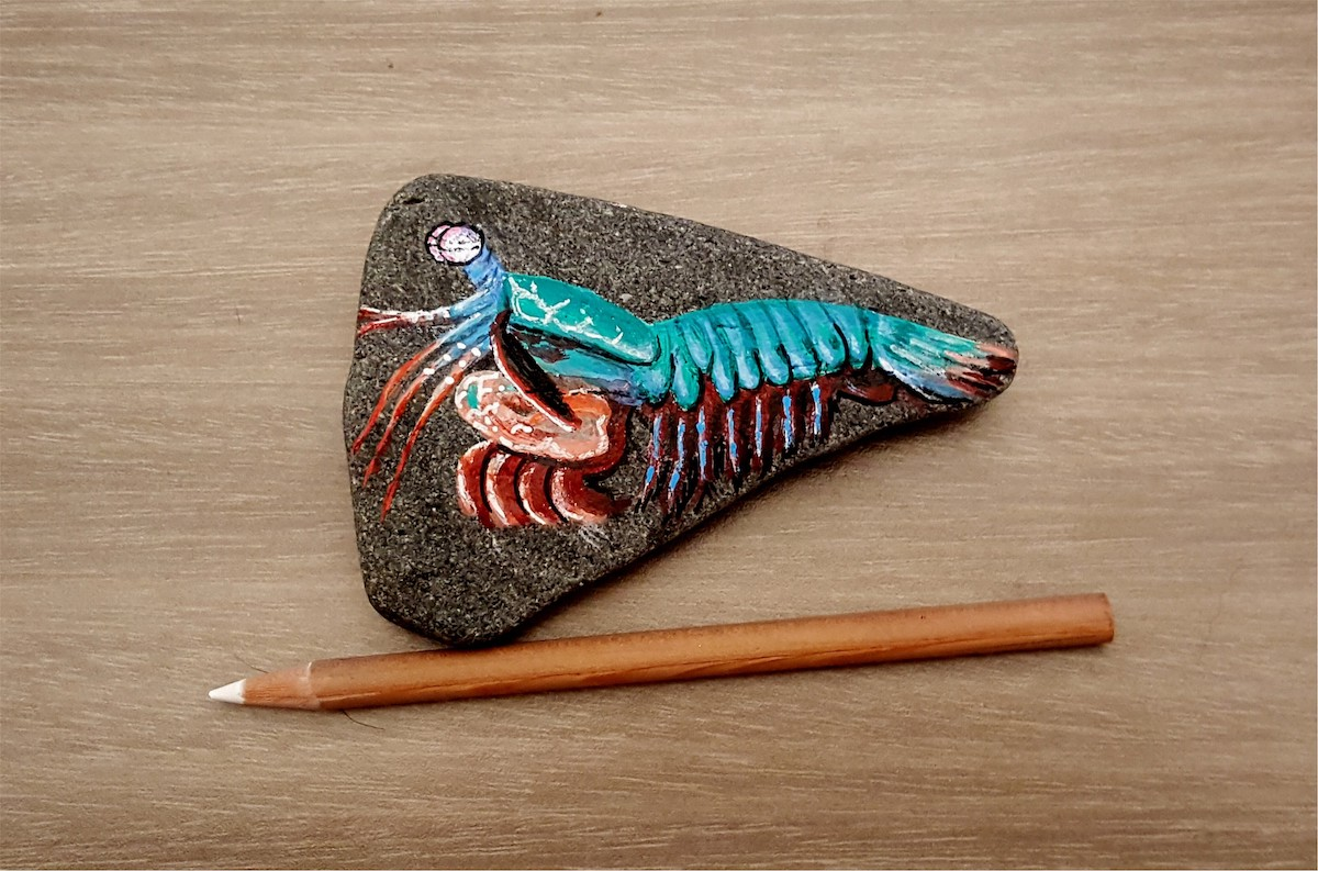 colorful blue mantis shrimp painted on a rock that is about the length of a pencil